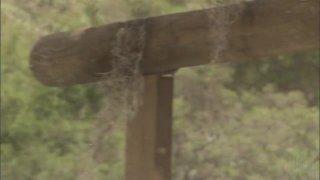 Streaming porn video still #7 from Camp Cuddly Pines Powertool Massacre