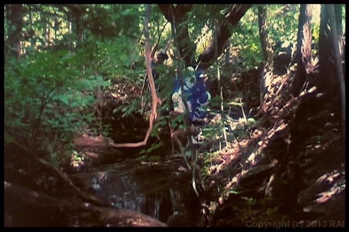 Alice In Wonderland Porn Stream 111